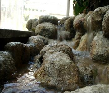 Serres du Jardin Botanique  Muséum d'Histoires  Naturelles toulouse