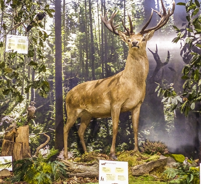 Tarn hunting association